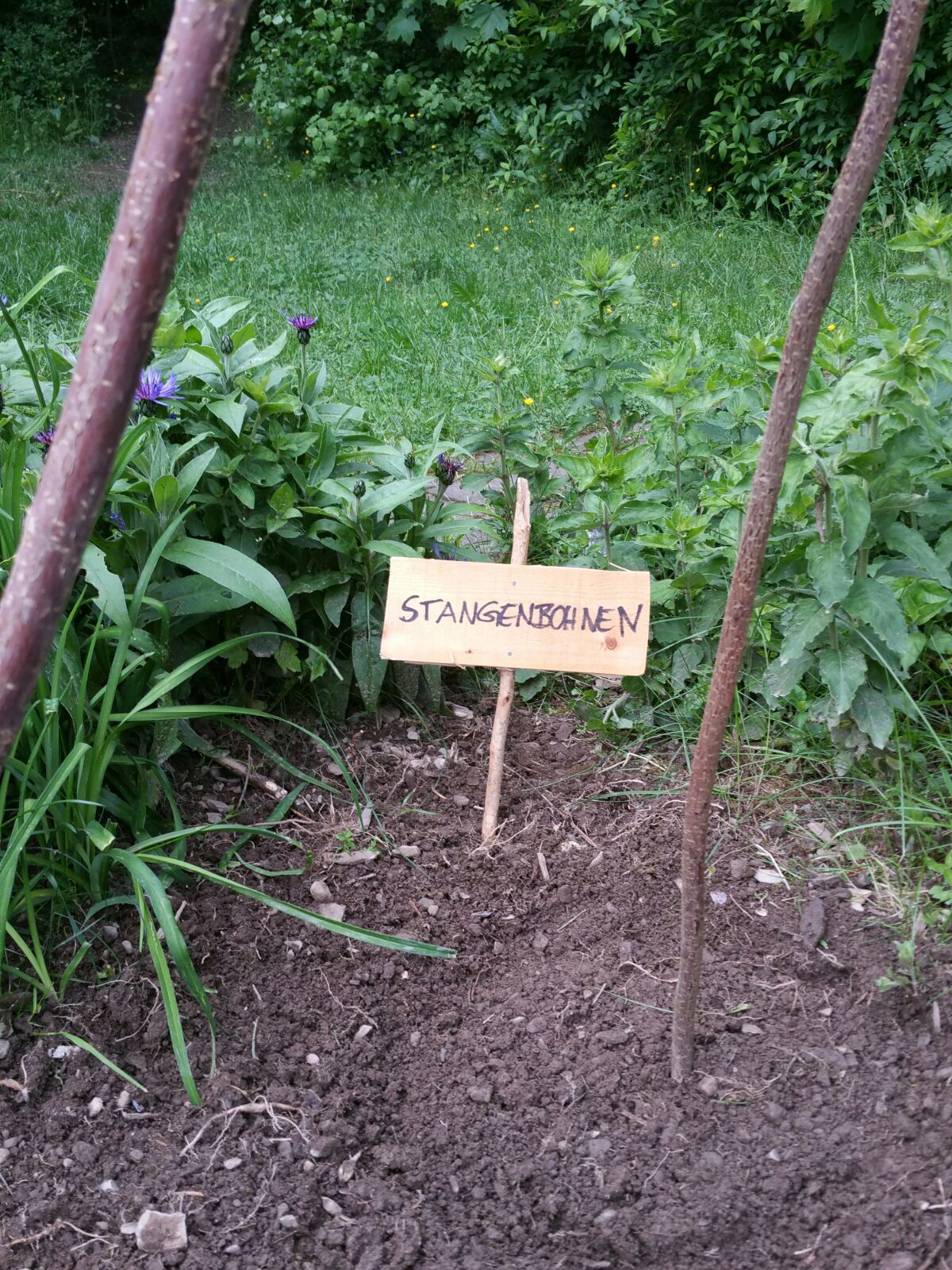 Schulgarten (10)